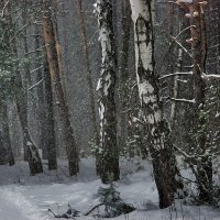 февральскими лесами :: sergej-smv