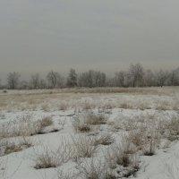 зимний пасмурный день :: Галина Кузнецова