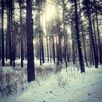 Зима :: Владимир Бардин