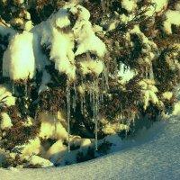 Холодная зима :: Александр Грищенко