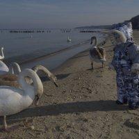 Разговор с лебедями... :: Анастасия Меркулова