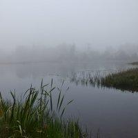 утренний туман :: ник. петрович земцов