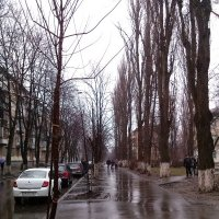 дождливое утро :: Ольга Дувалкина