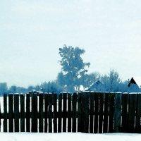 Забор :: Евгений Алябьев