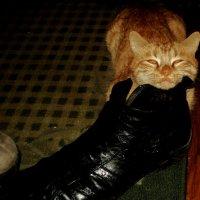Придёт он усталый с работы,а кошка уж трётся о боты.Забыв о вчерашних волнениях возьмёт он её на :: Ольга Кривых