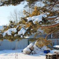 Сад зимой. :: Олег Афанасьевич Сергеев
