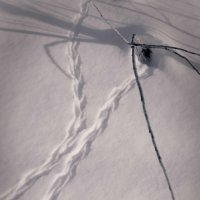 следы на снегу :: Анна VazhoVa