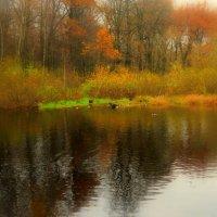 Осень на Терлецких прудах :: Наталья Лакомова
