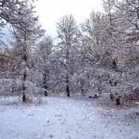 А снег идет :: Наталья Лакомова