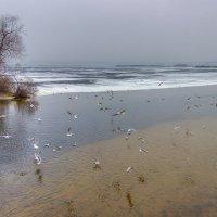 Речные чайки :: Denis Aksenov