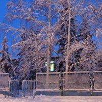 все в снегу.... :: Наталья Меркулова