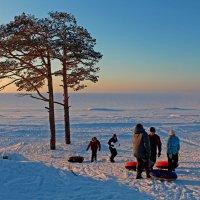 За соснами Белое море :: Владимир Шибинский