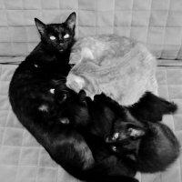 Роскошная жизнь на планете, у кошек, котов и котят!Но странные жители эти всё время о чём то грустят :: Ольга Кривых