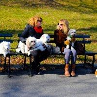 Дамы с собачками :: Ирина Бастырева