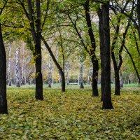 Осень :: Alexey Bogatkin