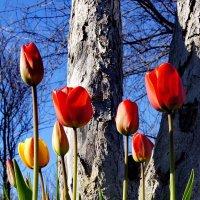 весна :: gribushko грибушко Николай