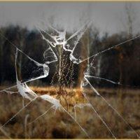 Через разбитое стекло :: лиана алексеева