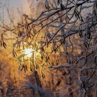 В лучах зимнего солнца. :: Любовь Анищенко