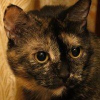 Портрет моей кошки :: Людмила