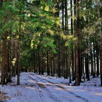 Лесной дорогой :: Юрий