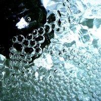 пузыри :: Дмитрий Потапов