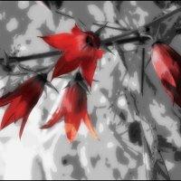 """Белла Ахмадулина / """" Весной, весной, в ее начале... """" :: Victor Vinocurov"""