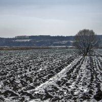 Одинокое дерево. :: Екатерина Рябинина