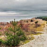 Долгая дорога в дюнах :: Владимир Самсонов