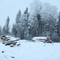 в лесу :: Константин Pasko