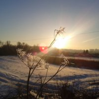 солнечный свет :: Лилия Бобкова