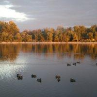 Утки на соленом озере :: Татьяна Пальчикова
