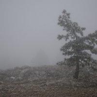 Одинокое дерево :: Иван Михайлович