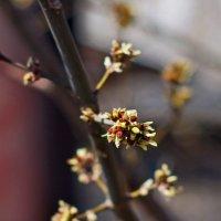 весна пришла :: gribushko грибушко Николай