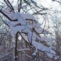 Снеговая ветка :: Елена Артамонова