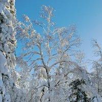 Лесные узоры :: Kogint Анатолий