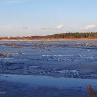 Тает лёд на поле, ...февраль.. :: Антонина Гугаева
