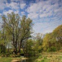Природа Донбасса :: Нилла Шарафан