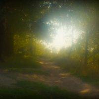 Сказки осеннего леса :: Игорь Герман
