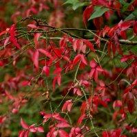 Краски Осени. :: Saniya Utesheva
