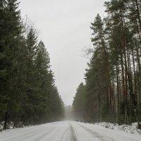 Февральская оттепель. :: Любовь Анищенко