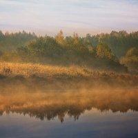 Лесное озеро... :: Александр Никитинский