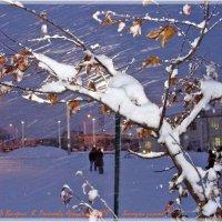 Холодно  зимой! :: Валерий Викторович РОГАНОВ-АРЫССКИЙ