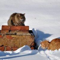 когда же март ? :: Сергей Розанов