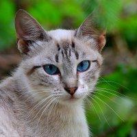 Голубоглазый блондин :: Андрей Куприянов
