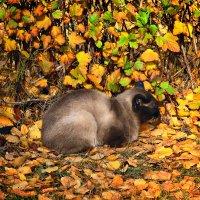 Осенний кот :: Татьяна Губина