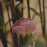 Скоро весна) :: Андрей Долонин