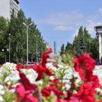 городские цветы :: Игорь Д