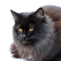 Уличный котик :: Dr. Olver