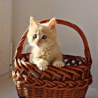 С праздником кошек! :: Сергей Круглов
