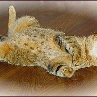 День кошек. Праздник удался.... :: Ольга Ламзина
